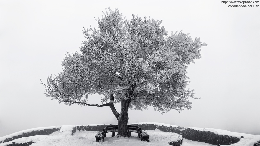 Frozen tree in Loewenburg ruin (Bad Honnef, winter, snow, ice)
