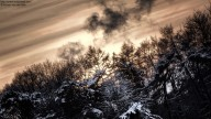 Photo: Silhouette of Snowy Treeline at sundown (HDR, wintertime)