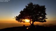 The tree on top of the Löwenburg at sundown